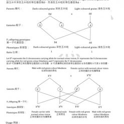 HKDSE Biology Basic and molecular genetics 基礎與分子遺傳學