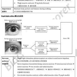 HKDSE Biology Coordination in humans 人體的協調