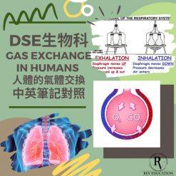 網上補習 Dse Biology 補習 Gas Exchange in humans 人體的氣體交換
